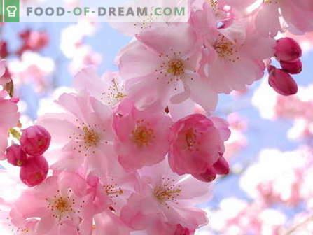 Sakura moos: kuidas süüa