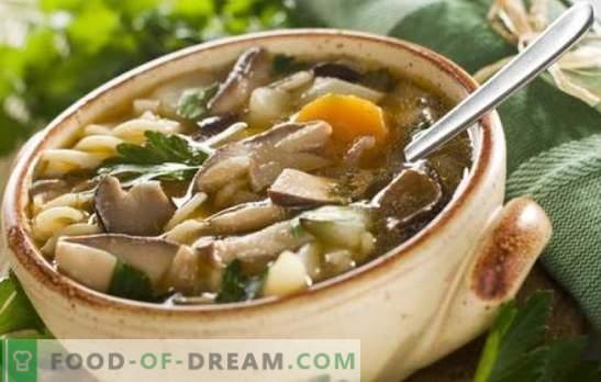 Seene šampinjonist supp - lihtne ja lihtne! Retseptid seene seente supp kana, tatar, pasta ja juustuga
