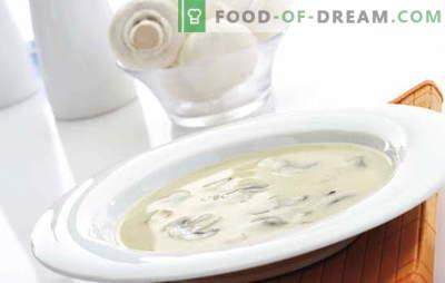 Champignoni koore supp on raske, kuid taskukohane tassi igale maitsele. Champignoni koore supp aluse erinevate variatsioonidega