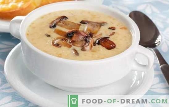 Seente supp-koor - maitsete ja aroomide hullus! Valik retsepte igasuguste seente koor suppide jaoks iga päev